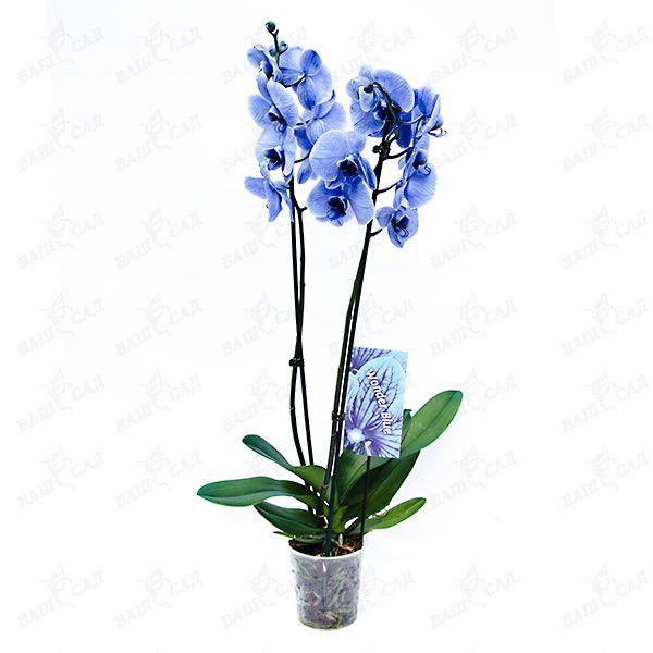 90feb9cdd300 Комнатные растения купить в интернет-магазине по низкой цене ...