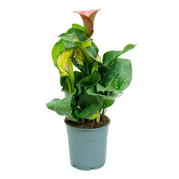 53792a1922f9 Растения купить в интернет-магазине по низкой цене    магазин Ваш Сад